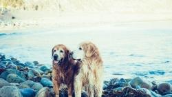 Naminių gyvūnų kastracija
