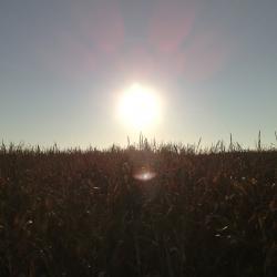 Biokuras – galimybė sutaupyti pinigų ir apsaugoti gamtą