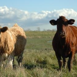 Gyvulininkystė – vis intensyviau plėtojamas verslas