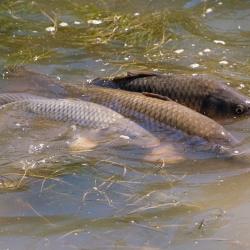 Žuvininkystės verslas – ir pelningas, ir atsakingas
