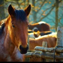 Žirgynai – verslas, sportas ir malonumas