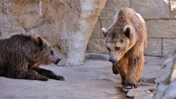 Zoologijos sodai - moksliniams tyrimams, gamtos saugojimui, pramogai