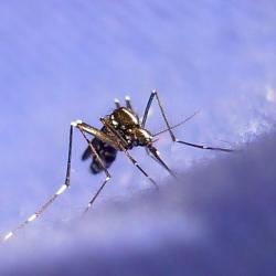 Natūralūs preparatai nuo vabzdžių įgėlimo