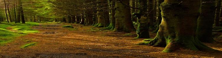 Darni miškininkystė kuria ekologinę ir ekonominę naudą