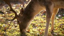 Didėjantys medžioklių plotai: ekologinė būtinybė ar amorali tradicija?