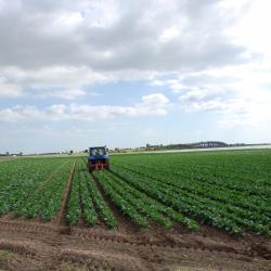 Žemės ūkio paskirties sklypų kainos krenta