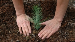 Pavasarinė prekyba medžių sodinukais ne visada sąžininga. Kaip neapsirikti?