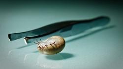 Skiepai nuo erkinio encefalito: liga, su kuria būtina kovoti