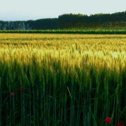 Ekologinio turizmo perspektyvos ir plėtros galimybės