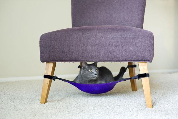 katės hamakas