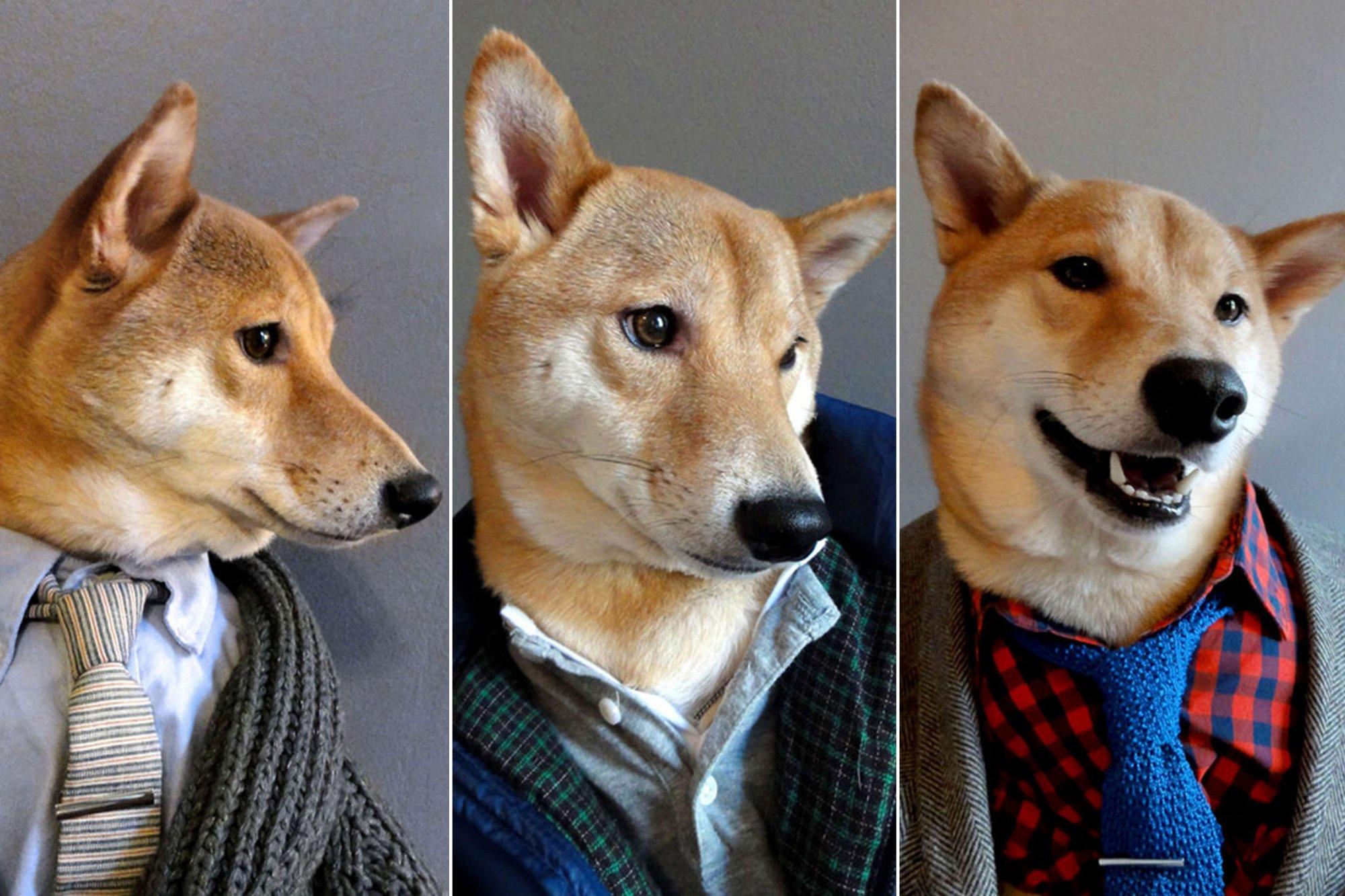šuo su rūbais